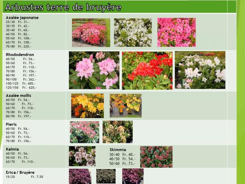 Plantes vivaces pour terre de bruy re p pini res baudat for Catalogue de plantes vivaces
